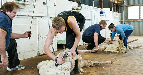 primary-ind-science-shearing