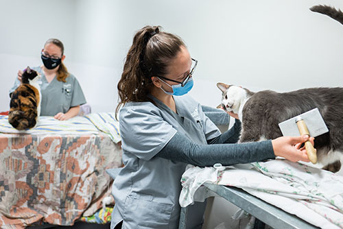 Animal Studies & Veterinary Nursing