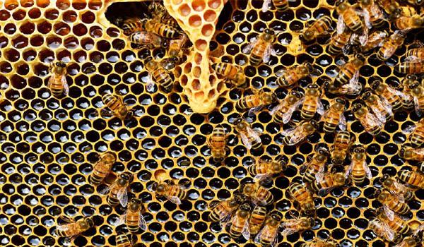 Bees - website